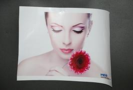 Self-Adhesive Vinyl- ի կողմից 3.2 մ (10 ֆուտ) Էկո վճարունակ տպիչ WER-ES3202 4